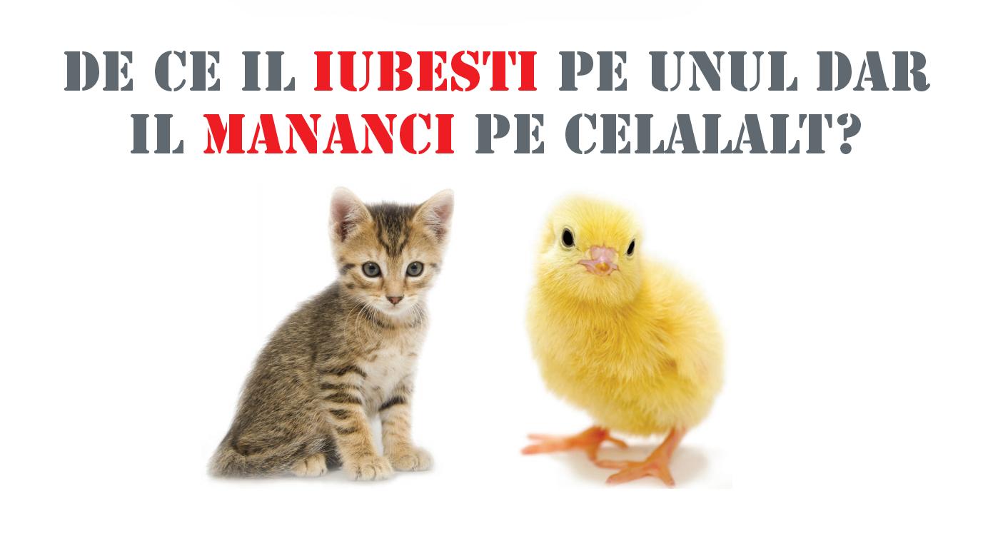 de_ce_nu_carne_www.fiimplinit.ro_pisica